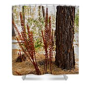 Pine Drops And Ponderosa Pine In Des Chutes Nf-or  Shower Curtain