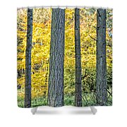 Pine Forest In The Autumn Shower Curtain