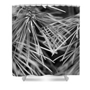 Pine Needle Abstract Shower Curtain