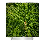 Pine Needles Shower Curtain