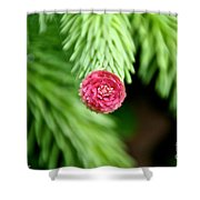 Pine Perfection Shower Curtain