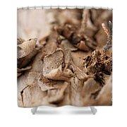 Pine Sprig Shower Curtain