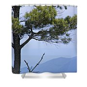 Pine Tree Along The Blue Ridge Parkway Shower Curtain