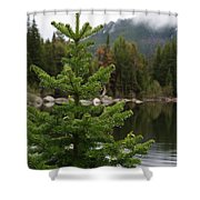 Pine Tree And Rain Drops Shower Curtain