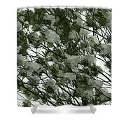 Pine Tree Branches Covered With Snow Shower Curtain