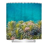 Pine Tree Branches With Turquoise Sea Background Shower Curtain