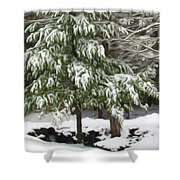 Pine Tree Covered With Snow 2 Shower Curtain