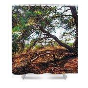 Pine Tree In Hoge Veluwe National Park 2. Netherlands Shower Curtain