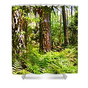 Pine Trees And Ferns Shower Curtain