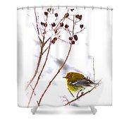 Pine Warbler-img-2143-001 Shower Curtain
