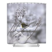 Pine Warbler In The Snow - Better Than Red Shower Curtain