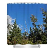 Pines In The Sky Shower Curtain