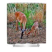Piney Mountain Doe And Fawn Shower Curtain