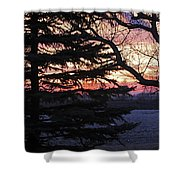 Piney Sunset Shower Curtain