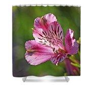 Pink Alstroemeria Flower Shower Curtain