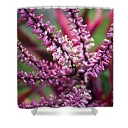 Pink And Cream Cluster Bloom Shower Curtain