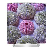 Pink And Green Urchins Shower Curtain