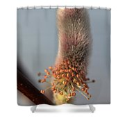 Pink And Grey Pussy Willow In Bloom Shower Curtain