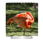 Pink And Orange Ball Shower Curtain