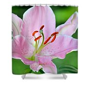 Pink Lily Shower Curtain