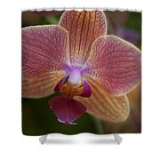 Pink And Orange Orchid Shower Curtain