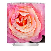 Pink And Peach Rose Flower Shower Curtain