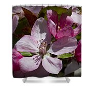 Pink And Pretty Shower Curtain