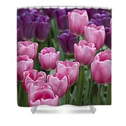 Pink And Purple Dutch Tulips Shower Curtain