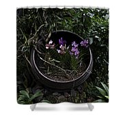 Pink And Purple Flowers In A Slanting Container Shower Curtain