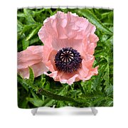 Pink And Purple Poppy Shower Curtain