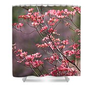 Pink And Purple Spring Trees Shower Curtain by Carol Groenen