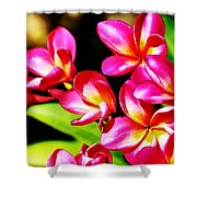 Pink And Red Plumeria Shower Curtain