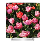 Pink And Red Ruffly Tulips Square Shower Curtain