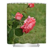 Pink And White Blended Stem Shower Curtain