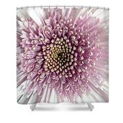 Pink And White Chrysanthemum Shower Curtain