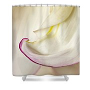 Pink And White Curve Shower Curtain
