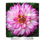 Pink And White Dahlia Square Shower Curtain