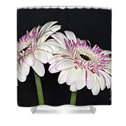 Pink And White Gerbera 2 Shower Curtain