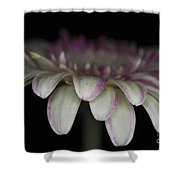 Pink And White Gerbera 3 Shower Curtain