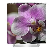 Pink And White Orchid Shower Curtain