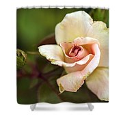 Pink And White Rose Shower Curtain