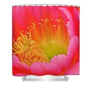 Pink And Yellow Cactus Flower Shower Curtain