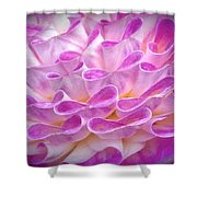 Pink And Yellow Dahlia Shower Curtain