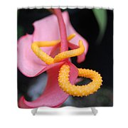 Pink And Yellow Orchids 1 Shower Curtain