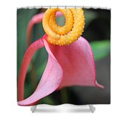 Pink And Yellow Orchids 2 Shower Curtain