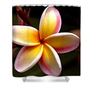 Pink And Yellow Plumeria Shower Curtain