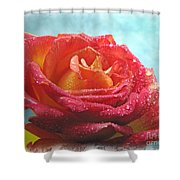 Pink And Yellow Rose With Dew II  Shower Curtain