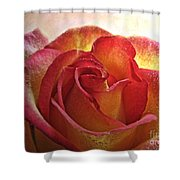 Pink And Yellow Rose With Water Drops Shower Curtain
