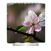 Pink Apple Blossom Shower Curtain
