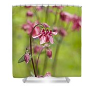 Pink Aquilegia Shower Curtain